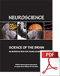 Neuroscience Science of the Brain